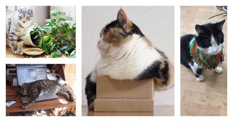 10 нюансов, о которых нужно знать, прежде чем обзавестись котом Любовь, животные, котизм, котики, коты