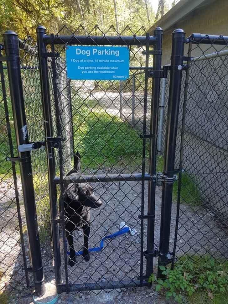 """6. Может показаться, что это не очень гуманный способ оставлять собаку, """"Парковка для собак"""" может выручить, когда нужно забежать быстро на почту или в магазин, не привязывая бедное животное к столбу гениально, задумки, идеи, трюки, фото"""