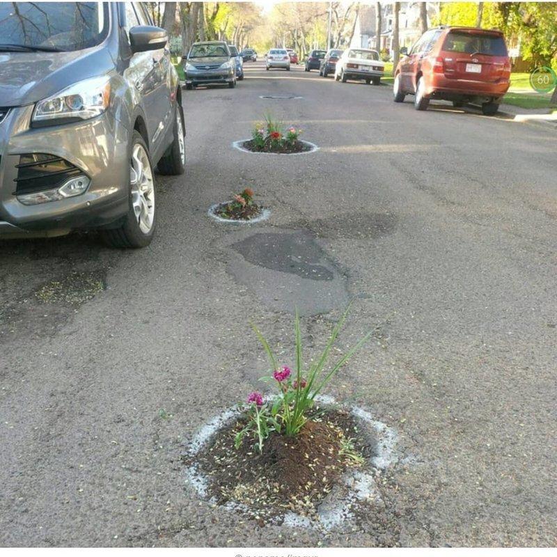 Даже целебные растения прикладывают, чтобы ямки не болели дороги, прикол, российские дороги, юмор, ямы
