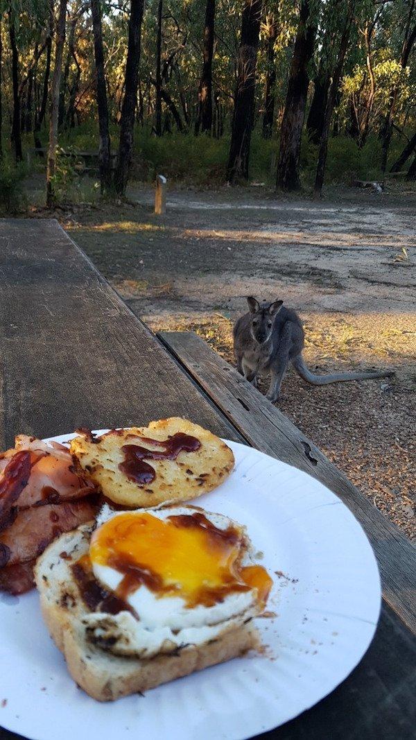 Австралийский завтрак день, животные, кадр, люди, мир, снимок, фото, фотоподборка