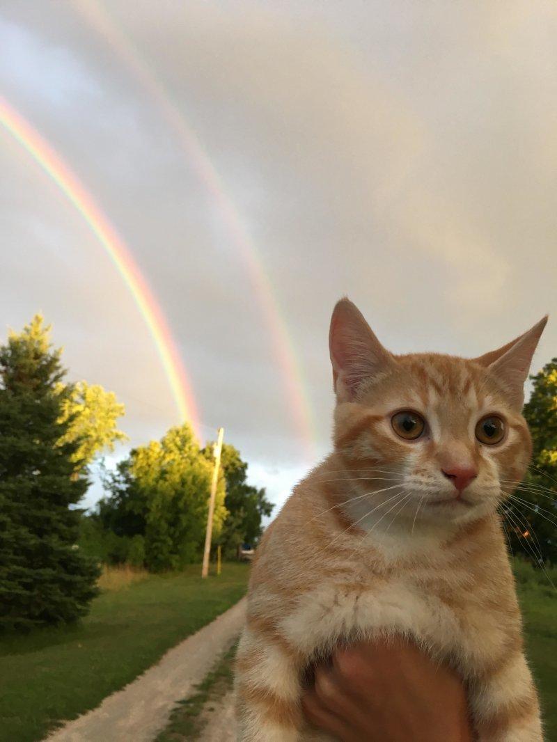 Рыжик и радуги день, животные, кадр, люди, мир, снимок, фото, фотоподборка