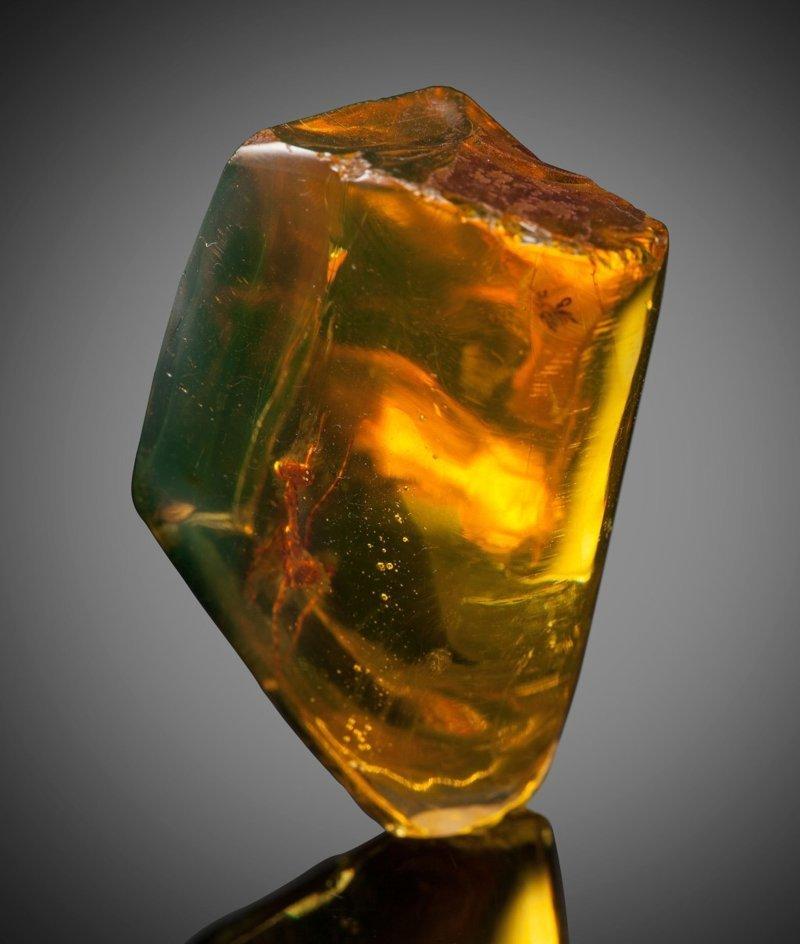Янтарь и застывший в нем богомол  12 миллионов лет назад Янтарь, богомол, в мире, удивительно, фото