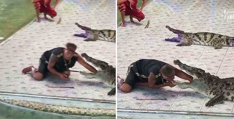 В Таиланде крокодил напал на дрессировщика прямо во время представления в мире, дрессировщик, животные, крокодил, люди, представление, таиланд