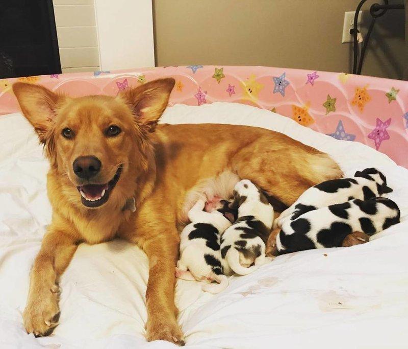 Несмотря на необычность её детишек, Рози отнеслась к своим материнским обязанностям очень серьёзно в мире, животные, милота, роды, собака, телята, щенки