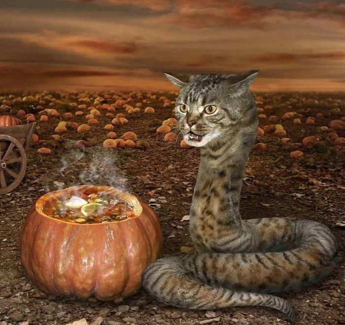 9. Котозмея и суп в тыкве. коллаж, ночной кошмар, страх, фантазия, фото, фотоманипуляции