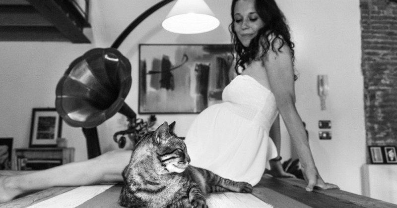 Фотограф развеивает предубеждения беременных к кошкам беременность, беременные и кошачьи, домашние животные, женщины и кошки, кошки, предубеждения, фото, фотопроект