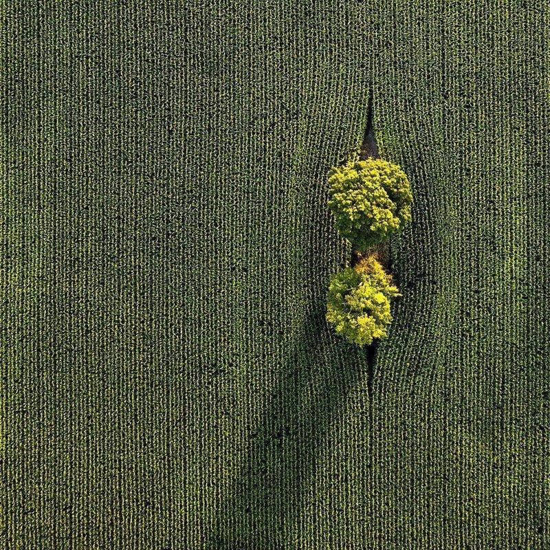 Поле в Канаде дроны, фото с высоты, фотографии с дронов, фотография