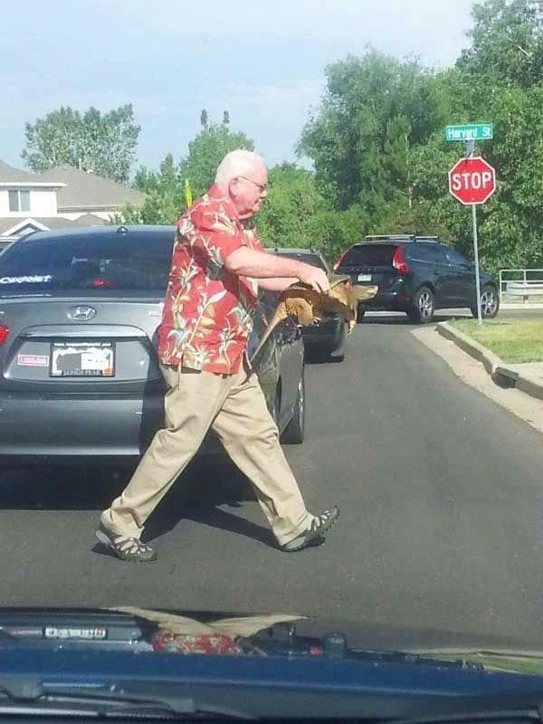 7. Мужчина помогает черепашке спокойно перейти дорогу, так как она не слишком хорошо знакома с ПДД в мире, добро, истории, люди, позитив, фото