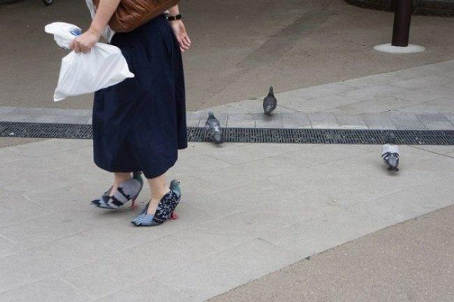 Туфли-голуби в мире, вещи, дизайн, дизайнер, идея, креатив, прикол