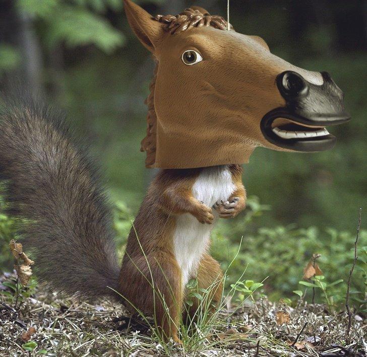 Кормушка для белок в виде головы лошади в мире, вещи, дизайн, дизайнер, идея, креатив, прикол