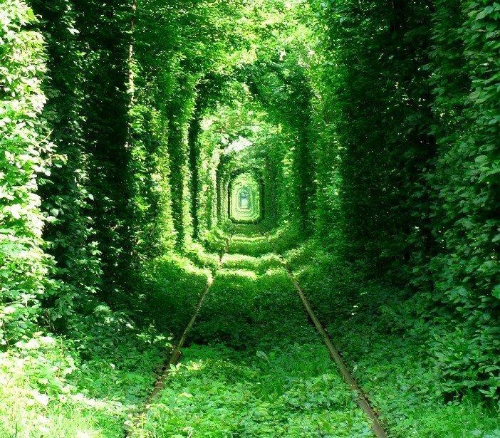 """6. """"Тоннель любви"""" у поселка Клевань, Украина интересно, планета земля, природа, удивительное рядом, факты о земле, факты о нашей планете"""
