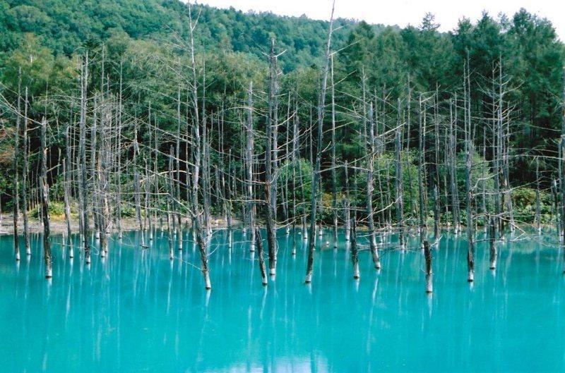 10. Голубой пруд на острове Хоккайдо, Япония  интересно, планета земля, природа, удивительное рядом, факты о земле, факты о нашей планете