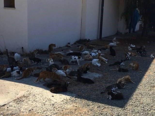 6. Котов можно поймать не только в коробку, но и в тень. жара, зной, кондиционер, лето, лужа, спасение, таять
