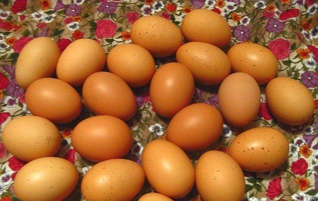 Куры, несущие разноцветные яйца. Часть первая домашние хитрости, куры, необычные куры, пасхальные куры, пасхальные яйца, породы кур, цветные яйца