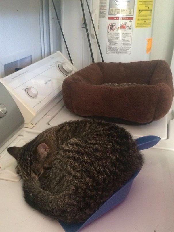 Но оказывается, есть те, кто не любит подушечки! интересное, отдых, подборка, подушки, сон, фото, юмор