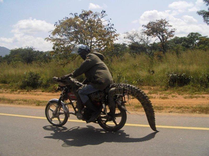 Это Африка, детка wtf? wtf, прикол, странности, что здесь происходит, юмор