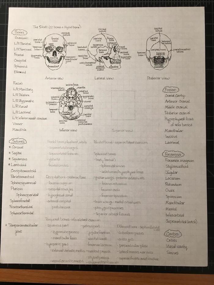 5. Записи по анатомии искусство, каллиграфия, красота, образец, письмо, почерк, пример