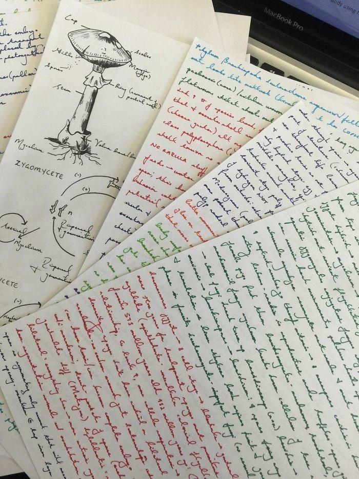 21. Биология искусство, каллиграфия, красота, образец, письмо, почерк, пример
