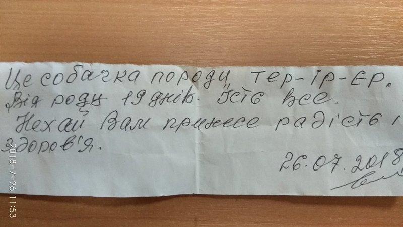 Щенок несуществующей породы был спрятан на лестнице. К нему прилагалось письмо! история, собаки, спасение