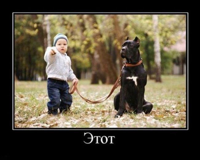 Демотиваторы с собаками демотиваторы, животные, собака, юмор