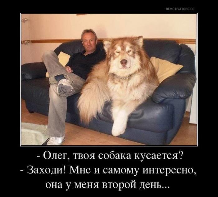 популярный хочу собаку демотиватор признал, что
