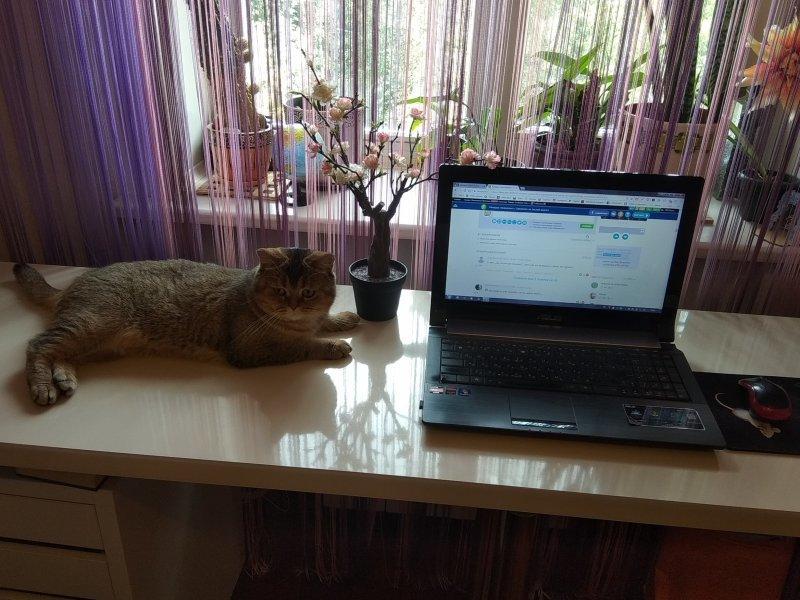 Опять Солнечногорск акция, деанон, компьютеры, ноутбуки, рабочее место, россия, фоточки рабочих мест