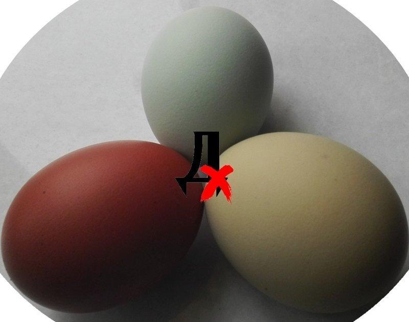 несущие яйца