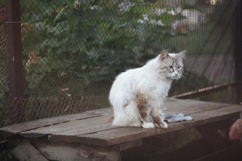 Очень колоритные уличные коты город, домашние животные, кот, кошка, улица, уличные животные, эстетика