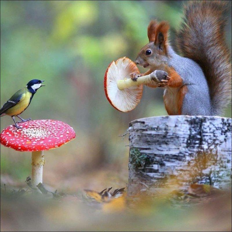 Интересные фото со всего света животные, прикол, юмор
