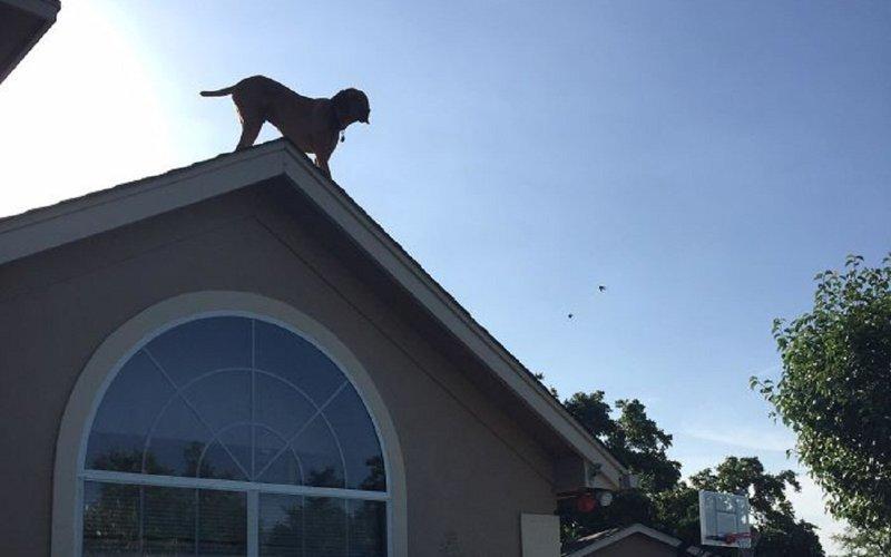 Собака придумала невероятный способ приветствовать хозяина домашние любимцы, животные, забавно, необычно, пес-скалолаз, псы и хозяева, собаки, собачья преданность