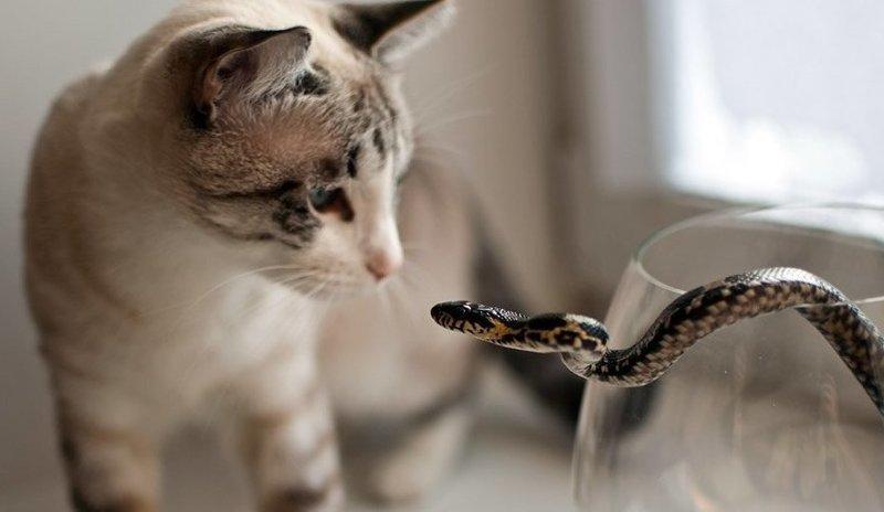 Кот змея картинки