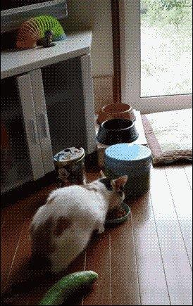 домашний питомец, животные, кот, кошка, прикол, юмор