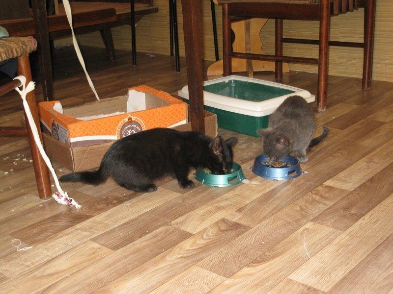 Люди кормили рыжего кота, покрытого шрамами… А его недавний поступок тронул их до слёз! история, кошки, спасение