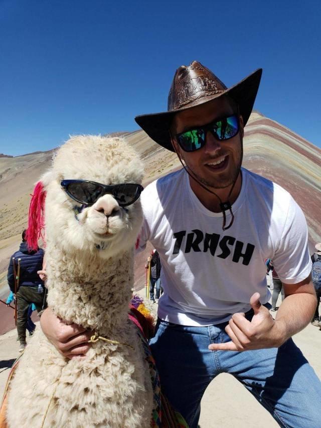 Крутая лама день, животные, кадр, люди, мир, снимок, фото, фотоподборка