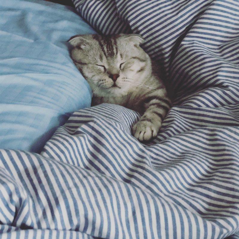 Сладкие сны день, животные, кадр, люди, мир, снимок, фото, фотоподборка