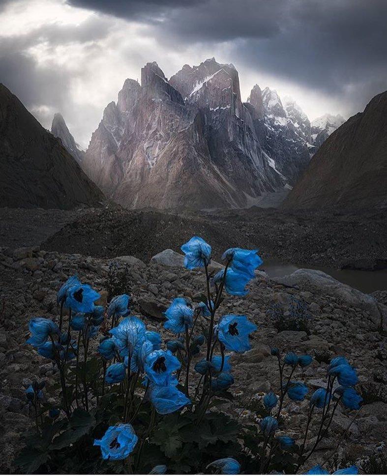 Ледник Балторо, Пакистан день, животные, кадр, люди, мир, снимок, фото, фотоподборка