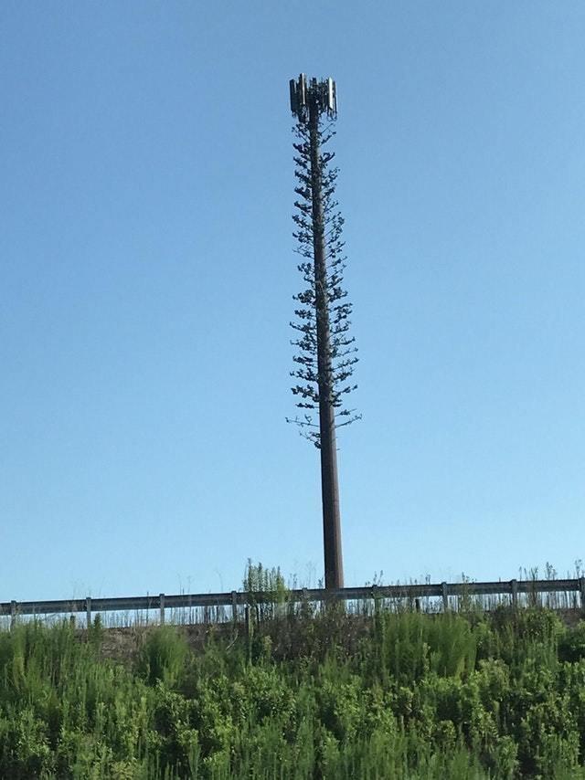 7. Вышка сотового оператора, сделанная в виде дерева восхищение, гениально, дизайнер, идея, креатив, проект, фантазия