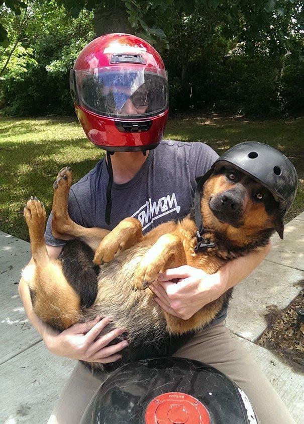 """9. """"Сестра попросила привезти ее собаку из другого города. Я сделал это фото и сказал, что мы уже выехали… домашний питомец, животные, кошка, прикол, собака, юмор"""