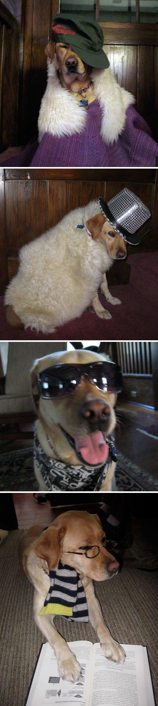 """7. """"Случайно нашла эти фото в своем телефоне — оказалось, что их делала моя 6-летняя сестра, когда нас не было дома…"""" домашний питомец, животные, кошка, прикол, собака, юмор"""