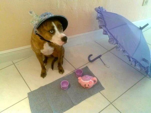 """5. """"Оставила племянницу с собакой на 20 минут, вернулась и увидела это…"""" домашний питомец, животные, кошка, прикол, собака, юмор"""