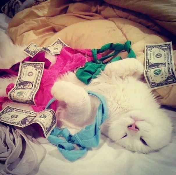 """8. """"Уехал на работу, оставил кота не попечение подруги, а она прислала мне это фото…"""" домашний питомец, животные, кошка, прикол, собака, юмор"""