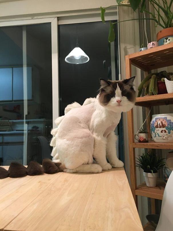 """2. """"Я попросила друга отвезти котика к парикмахеру…"""" домашний питомец, животные, кошка, прикол, собака, юмор"""