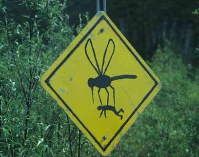 12. Действительно, опасно! насекомые, нашествие насекомых, природа, фото