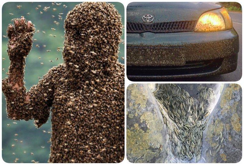 Ад на Земле: нашествие насекомых в России, как первый признак апокалипсиса насекомые, нашествие насекомых, природа, фото
