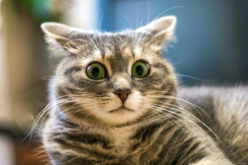 Как взвесить кота и не поседеть взвесить кота, истории, прикол, юмор