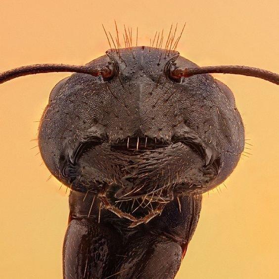 """Казалось бы простой муравей, а сколько строгости на его """"лице"""" виды, красиво, лица, насекомые, природа, фото"""