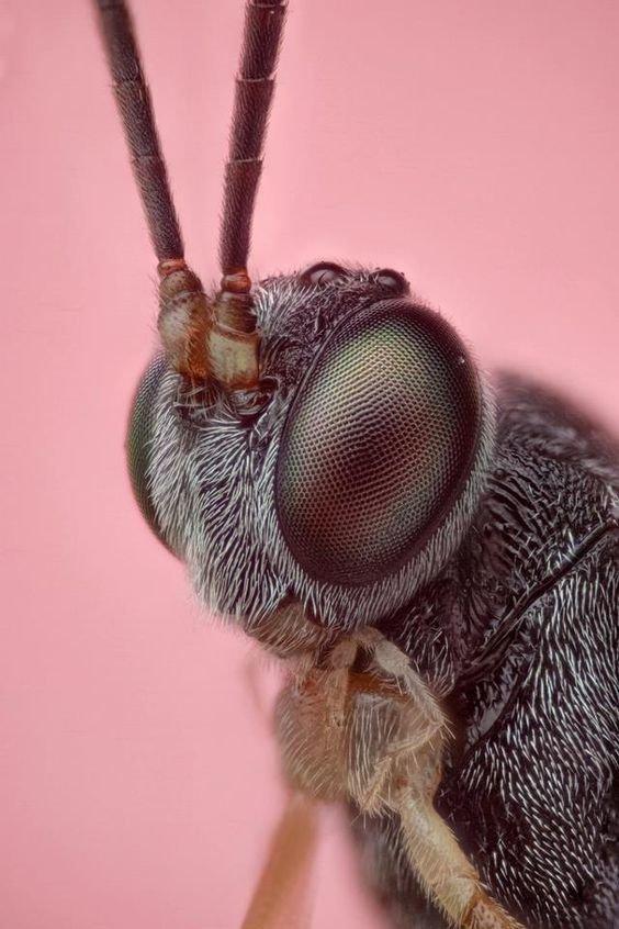 Милые бабочки и мотыльки виды, красиво, лица, насекомые, природа, фото