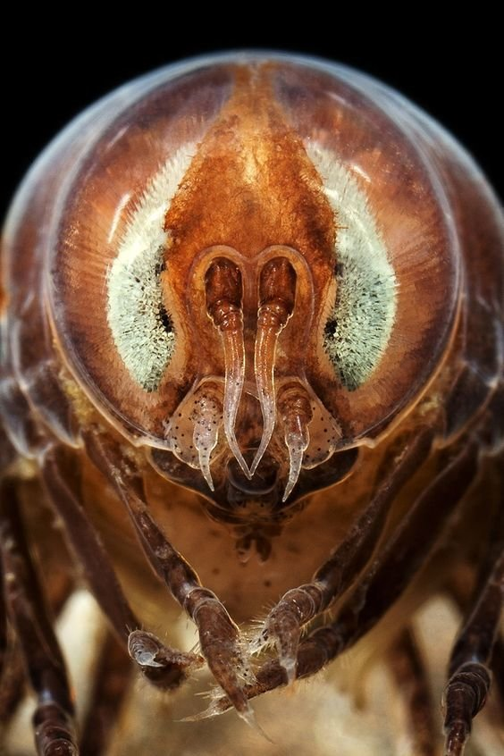 Задумчивые мухи и мушки виды, красиво, лица, насекомые, природа, фото
