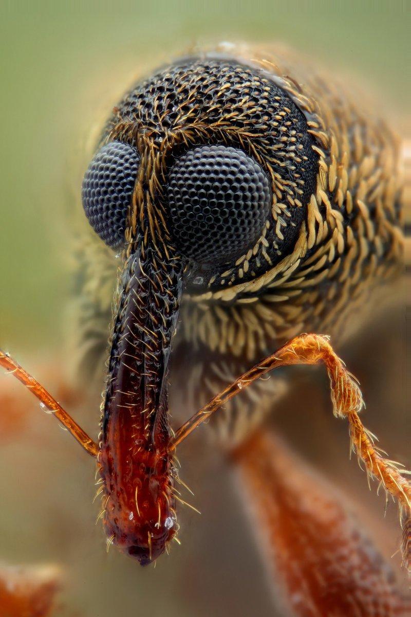 Удивленный долгоносик и стрекоза виды, красиво, лица, насекомые, природа, фото