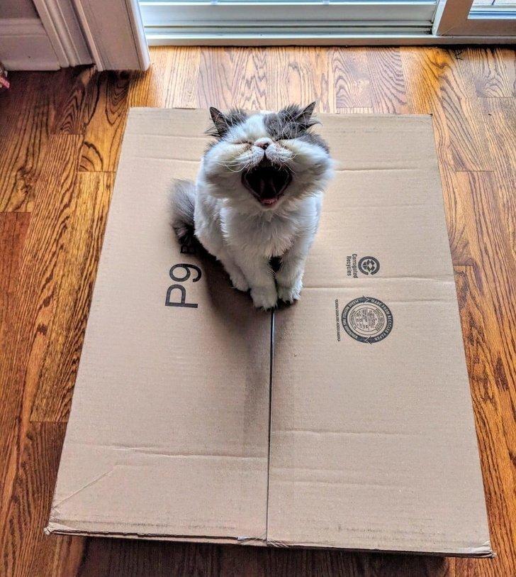 Тот момент, когда осознал, что коробка закрыта домашний питомец, животные, кошка, милота, собака, эмоции